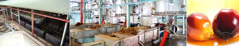 palm oil processing unit of industrial scale factory or company
