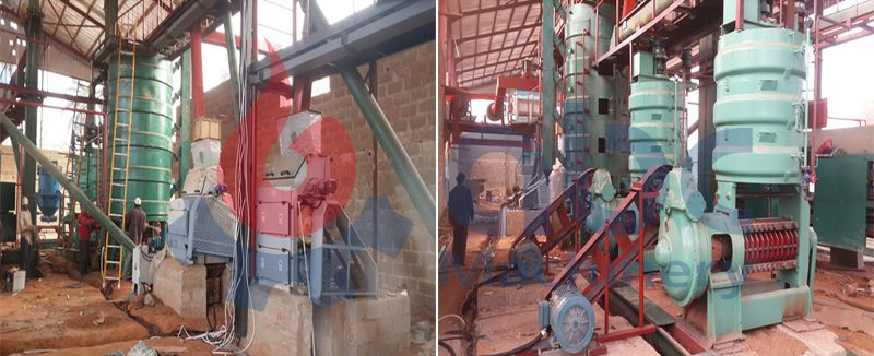 low cost palm kernel oil pressing equipment