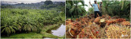 Market and Cost Analysis of Palm Oil Processing Business in Brazil