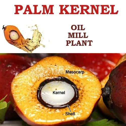 palm kernel oil producing