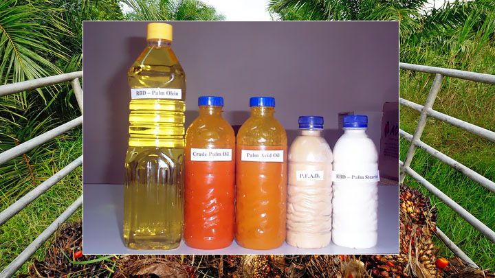 RBD Palm Oil Production