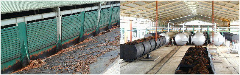 successful palm oil processing plant in Nigeria