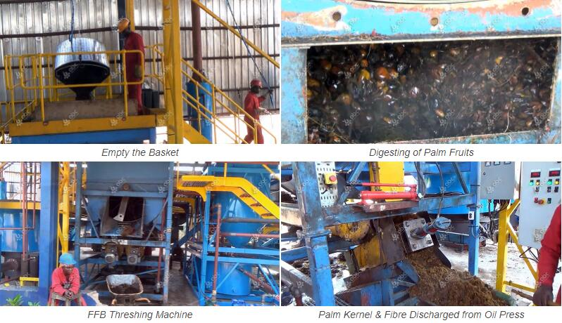 complete palm fuit processing machine for sale