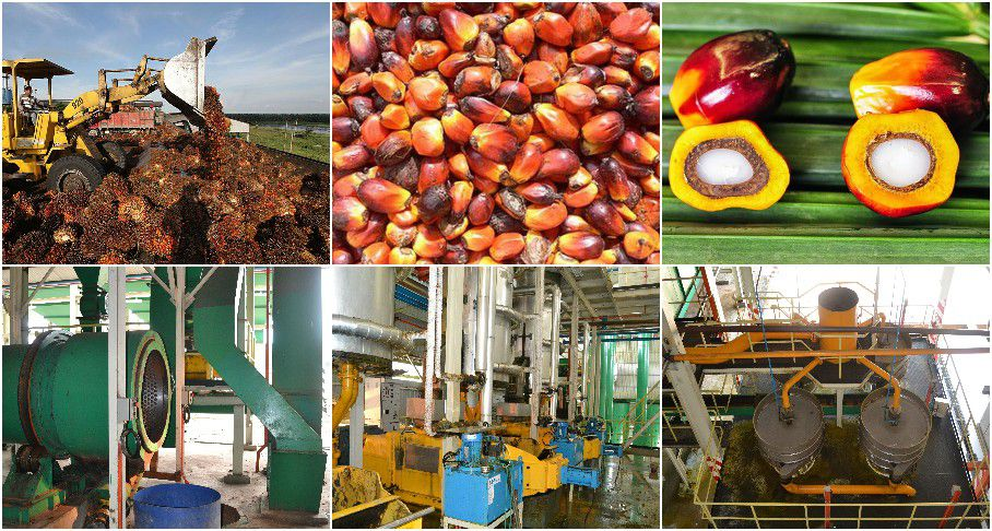 palm oil milling machinery supplier at low cost