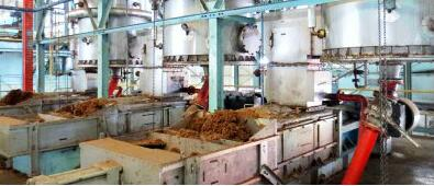 Palm Oil Pressing Plant