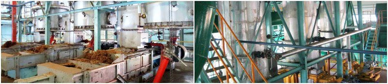digesting process of palm oil mill
