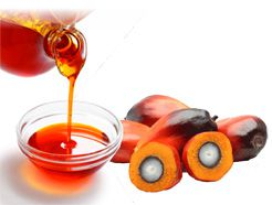 extraction of palm oil