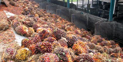palm oil production fruit reception equipment
