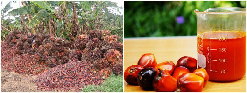 build a small palm oil mill for making red palm oil