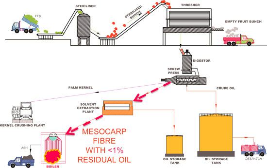 mechanical palm oil extraction process