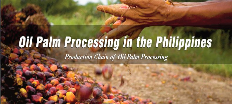 oil palm processing in the Philippines