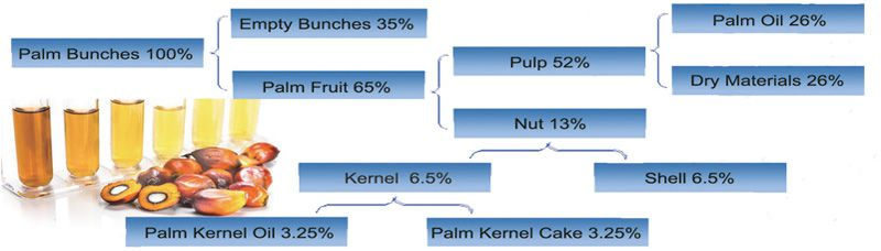 the basic information of palm fruits and palm kernel oil