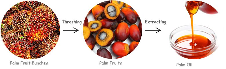 palm fruit bunches separation