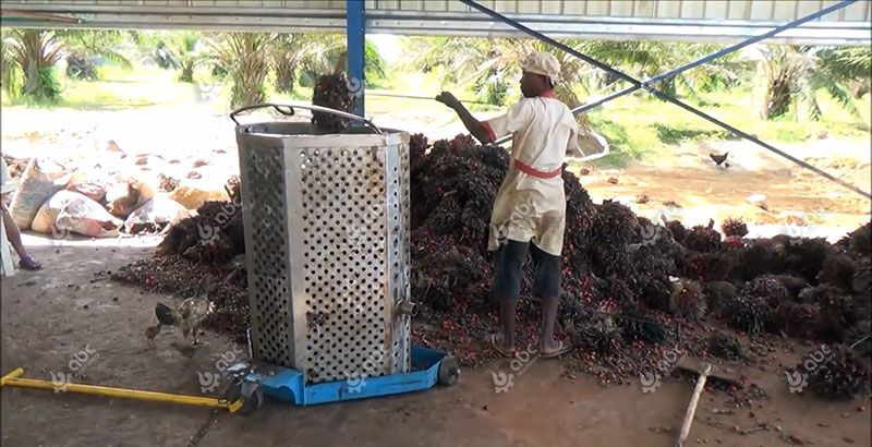 palm fruit loading process of the small palm oil factory