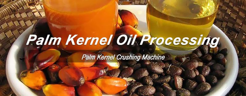 palm kernel oil processing business plan