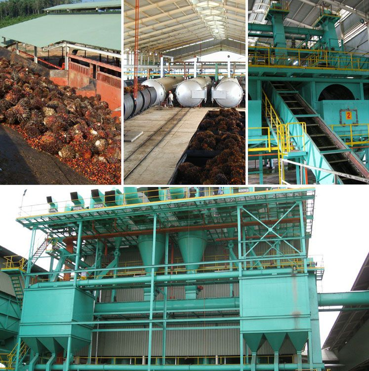 palm oil extracting factory