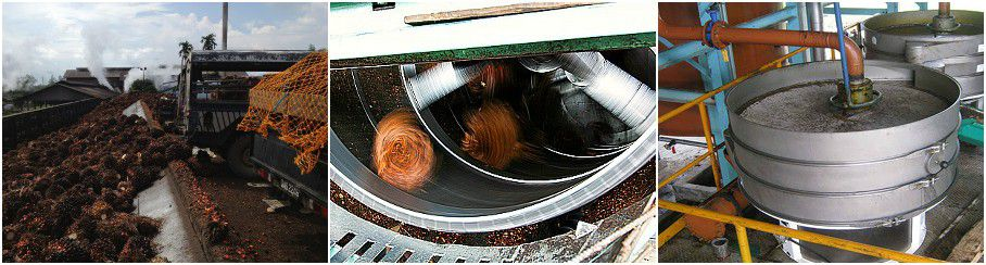 palm oil extraction process in palm oil extraction plant