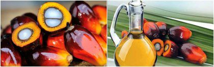 How to Choose the Best Palm Oil Mill Supplier?