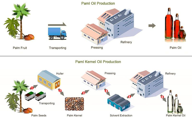 palm oil and palm kernel oil production