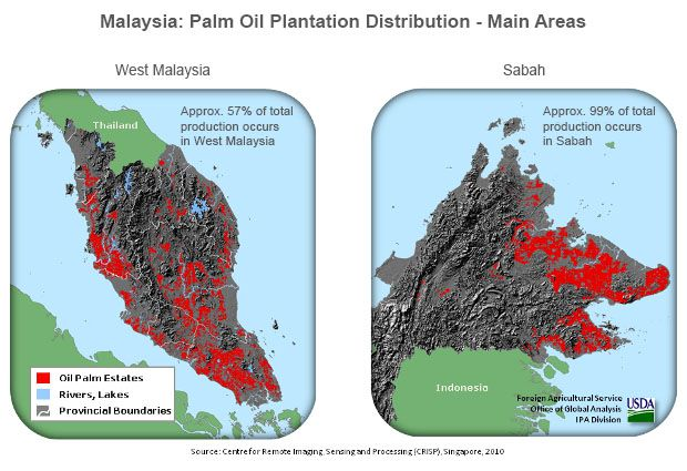 palm oil plantation distribution in Malaysia