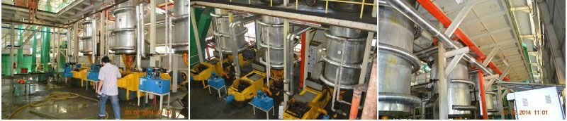 palm oil processing digesting