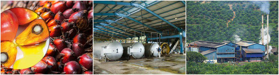 BEST palm oil solvent extraction plant