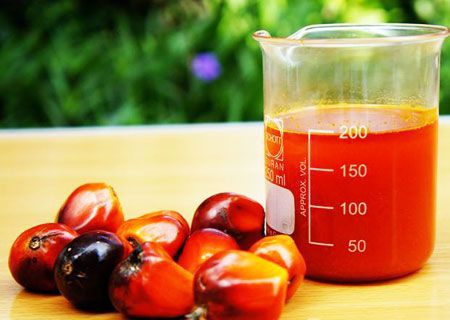 produce red palm oil for cooking purpose